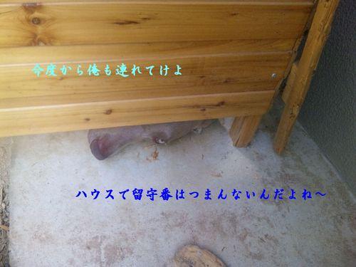 c0203077_0553835.jpg