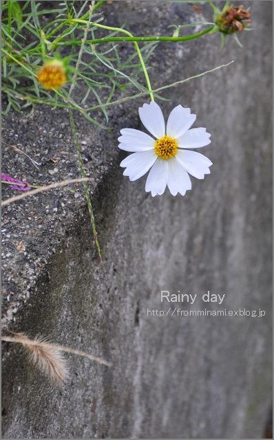 After the rain_e0184300_11594994.jpg