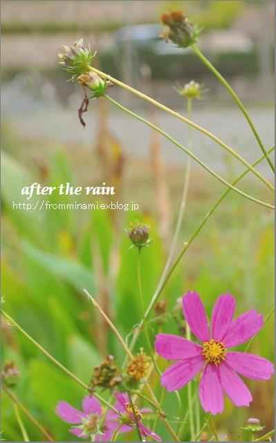 After the rain_e0184300_12302173.jpg