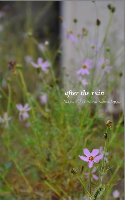 After the rain_e0184300_12312878.jpg