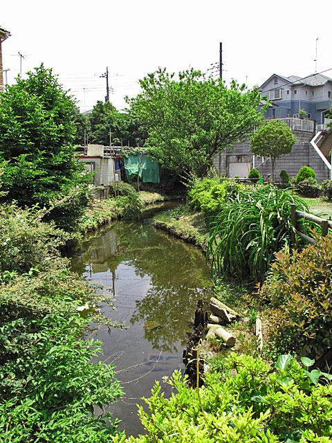 落合川を辿る(3)緑溢れる中流域_c0163001_18344745.jpg