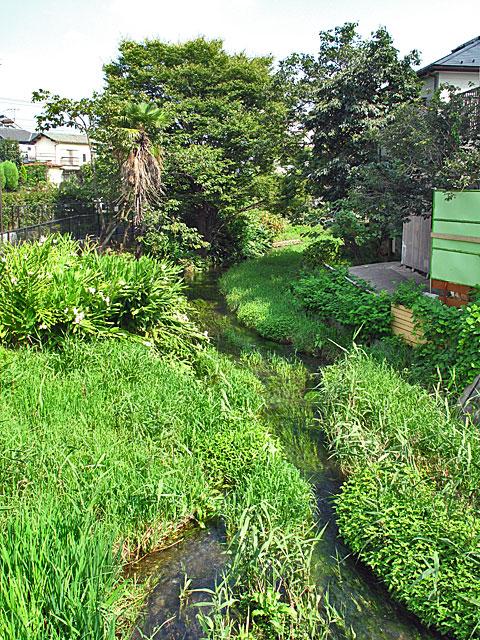 落合川を辿る(3)緑溢れる中流域_c0163001_18355136.jpg