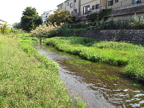 落合川を辿る(3)緑溢れる中流域_c0163001_18361623.jpg