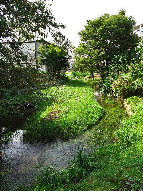 落合川を辿る(3)緑溢れる中流域_c0163001_1836944.jpg
