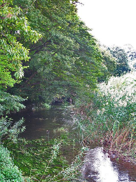 落合川を辿る(3)緑溢れる中流域_c0163001_1837161.jpg
