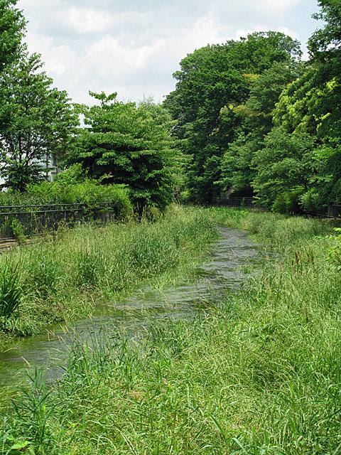 落合川を辿る(3)緑溢れる中流域_c0163001_18372893.jpg