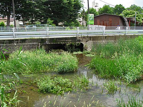 落合川を辿る(3)緑溢れる中流域_c0163001_1837699.jpg