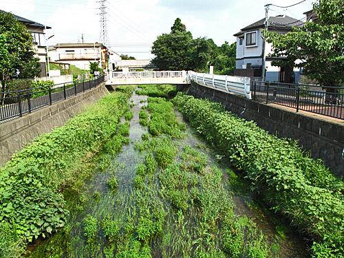 落合川を辿る(3)緑溢れる中流域_c0163001_18393672.jpg
