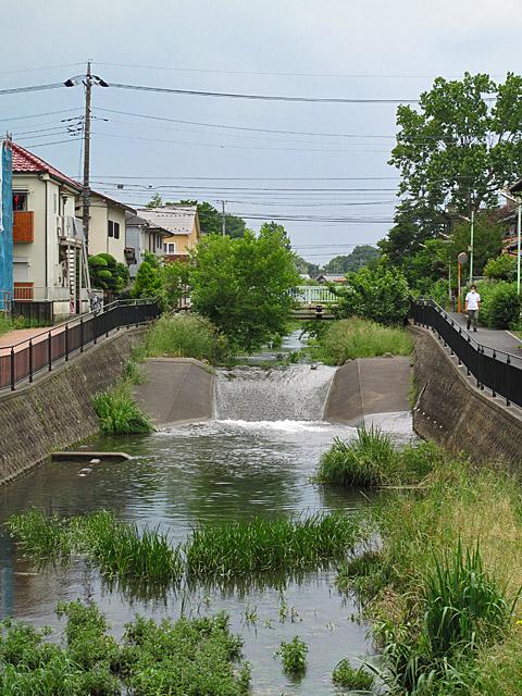 落合川を辿る(3)緑溢れる中流域_c0163001_1839476.jpg