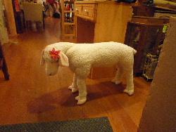 LIVE!『羊毛とおはな』@七ヶ月_d0008402_11235121.jpg