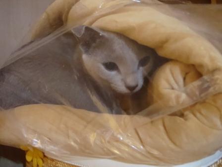 猫好きをさらに猫好きにする本_c0125114_1823419.jpg