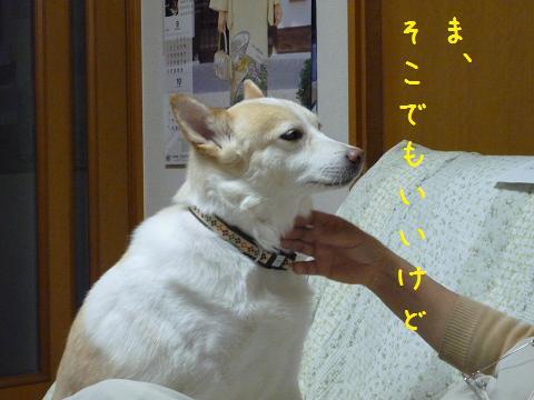 b0138430_2017189.jpg