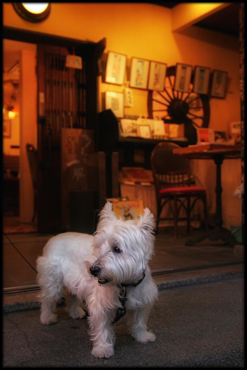 犬わん_f0021869_2314283.jpg