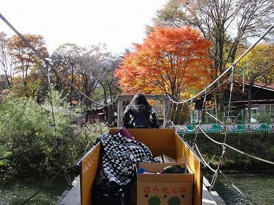 秋はやはり紅葉だ!寒いけど_d0061678_13337100.jpg