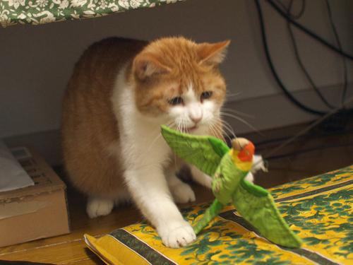 【紅姫】 鳥玩具遊び02:しつこい…けど気になる_a0066779_5572356.jpg