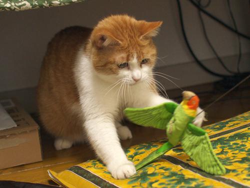 【紅姫】 鳥玩具遊び02:しつこい…けど気になる_a0066779_558422.jpg