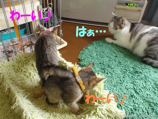 譲るシロ兄_a0159490_15295464.jpg