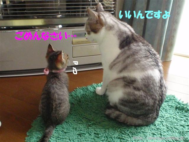 譲るシロ兄_a0159490_15302024.jpg