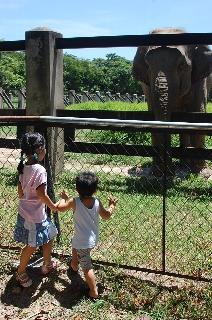 この国の動物園_d0113490_2014511.jpg