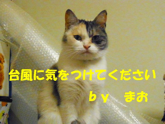 f0218911_3213443.jpg