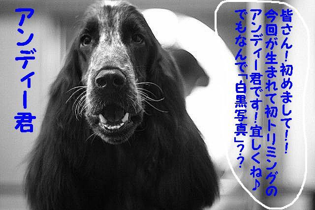 台風はいまどこじゃぁ~~~~!!??_b0130018_17551447.jpg