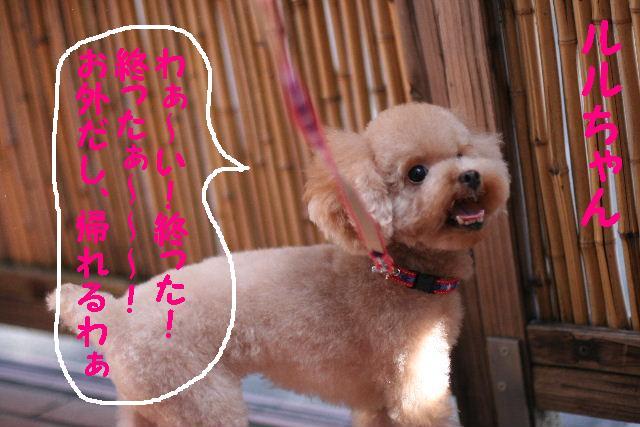 台風はいまどこじゃぁ~~~~!!??_b0130018_17562460.jpg