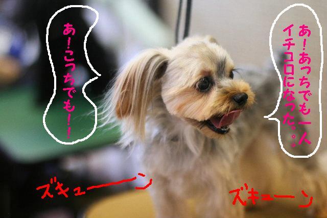 台風はいまどこじゃぁ~~~~!!??_b0130018_17573645.jpg