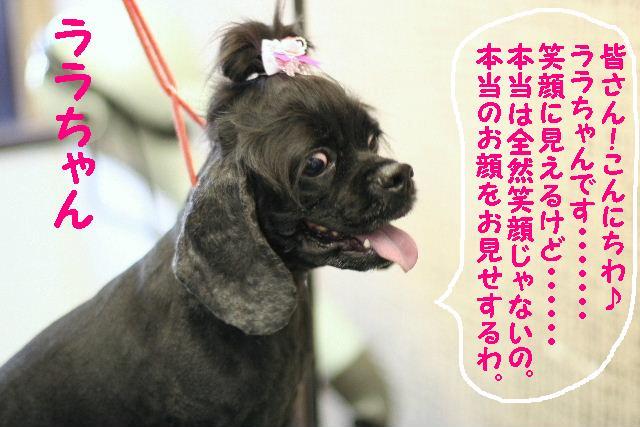 台風はいまどこじゃぁ~~~~!!??_b0130018_1758412.jpg