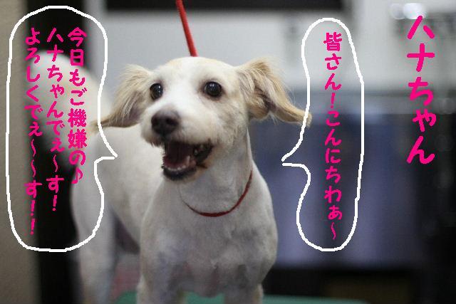 台風はいまどこじゃぁ~~~~!!??_b0130018_1801099.jpg