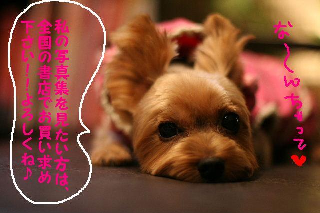 台風はいまどこじゃぁ~~~~!!??_b0130018_1821823.jpg