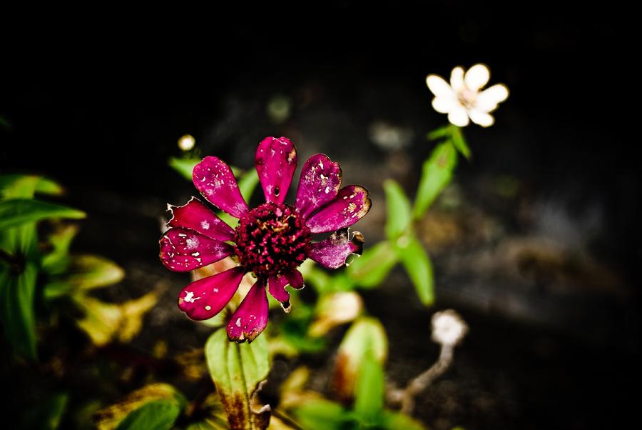 FLOWER_c0195620_14442227.jpg