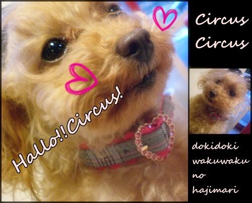 CIRCUS CIRCUS_b0084929_20212423.jpg