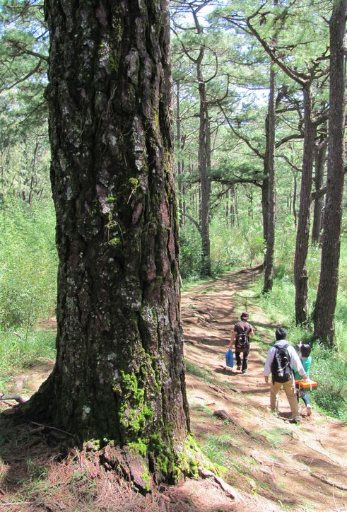 身近にあるハイキング・コース Eco Trail in Camp John Hay_a0109542_20131164.jpg