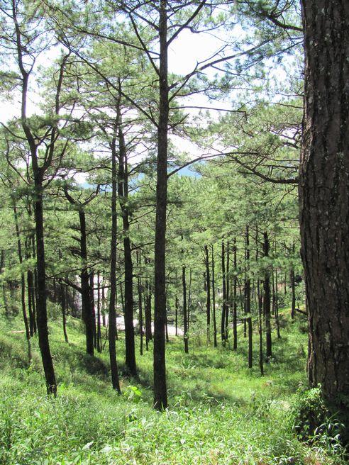 身近にあるハイキング・コース Eco Trail in Camp John Hay_a0109542_20151486.jpg