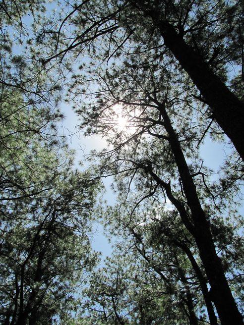 身近にあるハイキング・コース Eco Trail in Camp John Hay_a0109542_20202250.jpg