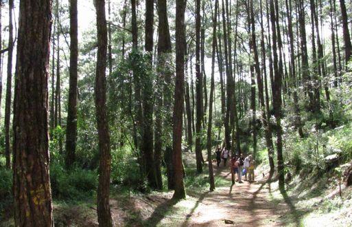 身近にあるハイキング・コース Eco Trail in Camp John Hay_a0109542_20263741.jpg