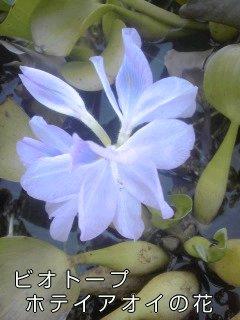 f0222943_1905341.jpg
