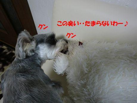 b0206444_11494232.jpg