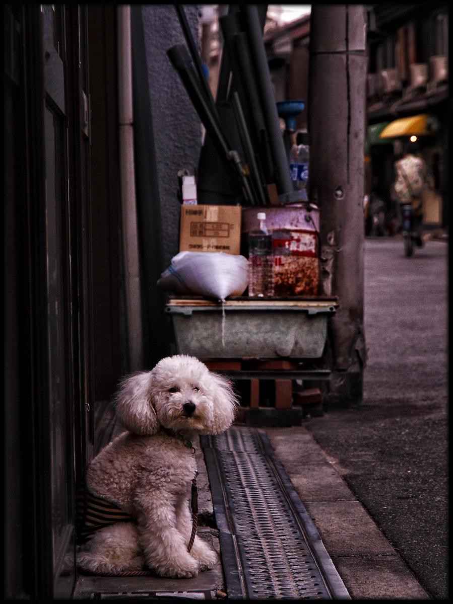 犬わん_f0021869_23332650.jpg