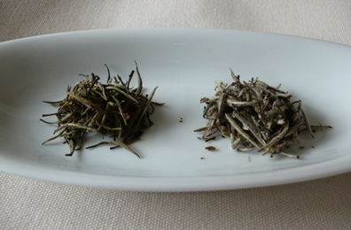 「白茶の会」のお知らせ_e0148373_1036369.jpg