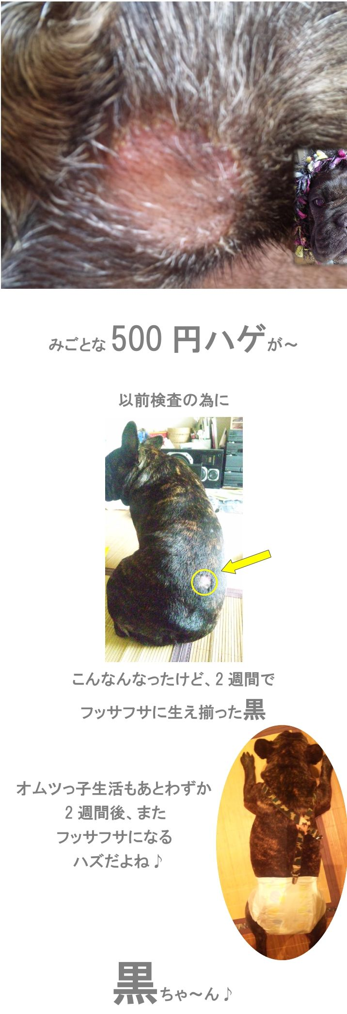 e0199784_15811.jpg