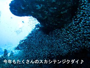 f0144385_951787.jpg