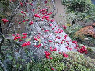 赤い実は目立ちます。_d0027486_7101624.jpg