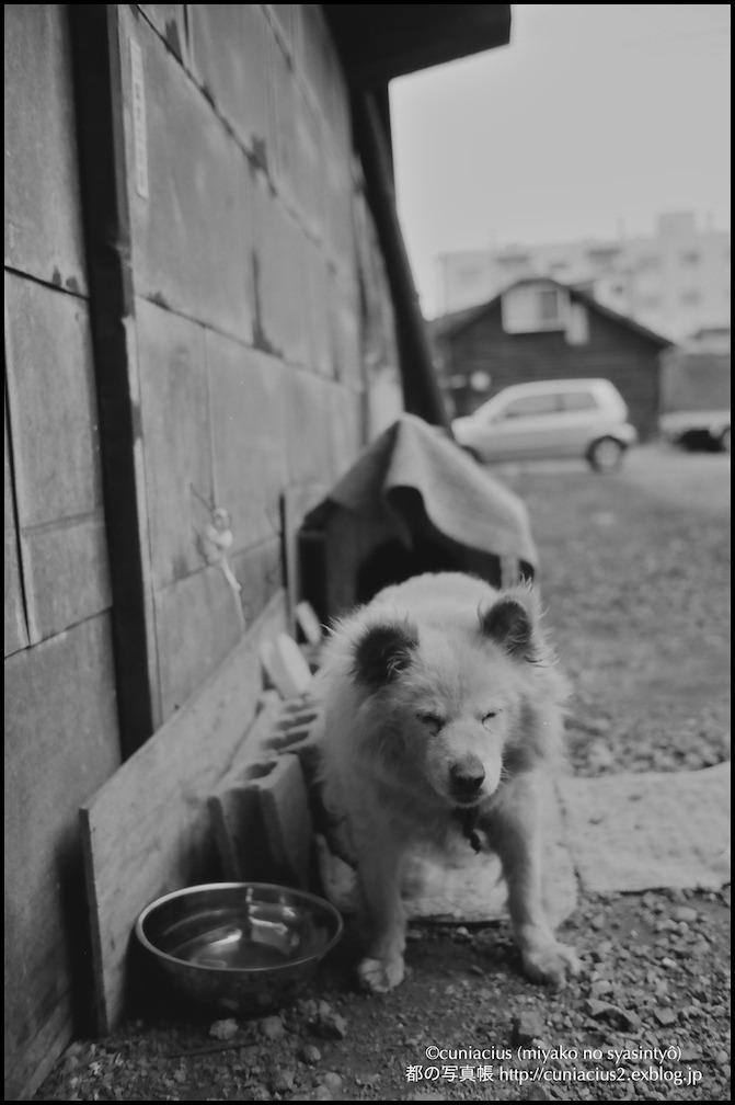 諏訪神社の老犬_f0042194_026158.jpg