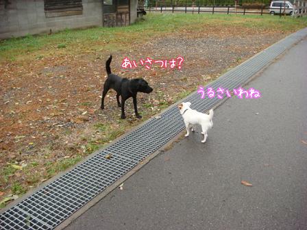 雨上がりの早朝散歩_f0064906_18293273.jpg