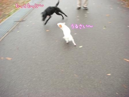 雨上がりの早朝散歩_f0064906_1829563.jpg