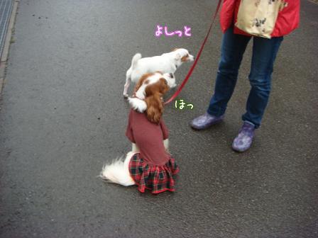 雨上がりの早朝散歩_f0064906_18325262.jpg