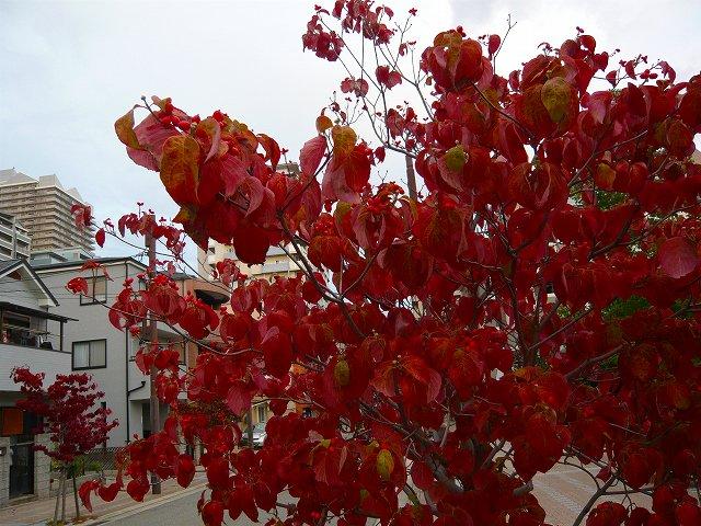 小さい秋 見ぃつけた~♪_f0223914_23504288.jpg