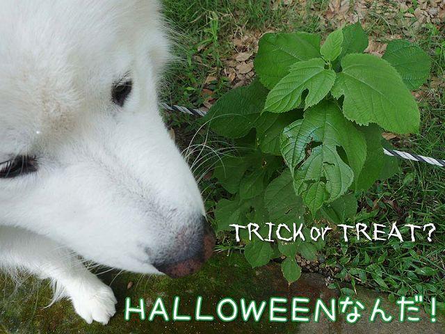 Happy Halloween_c0062832_17343933.jpg
