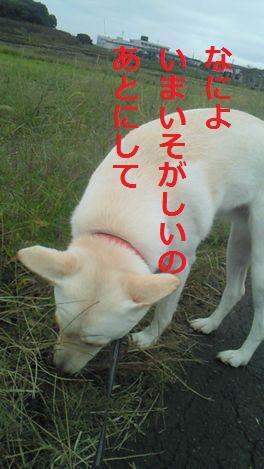 f0195543_16292082.jpg